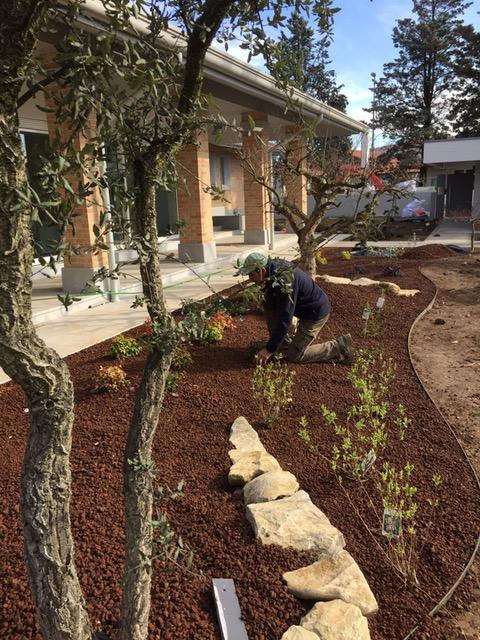 realizzazione e manutenzione giardini udine